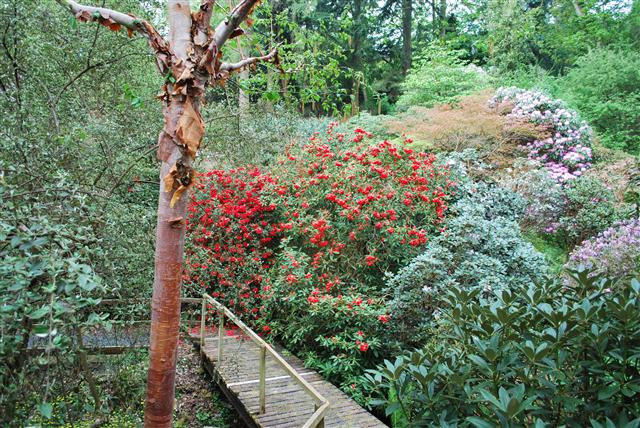 Glendoick Garden, Perthshire.