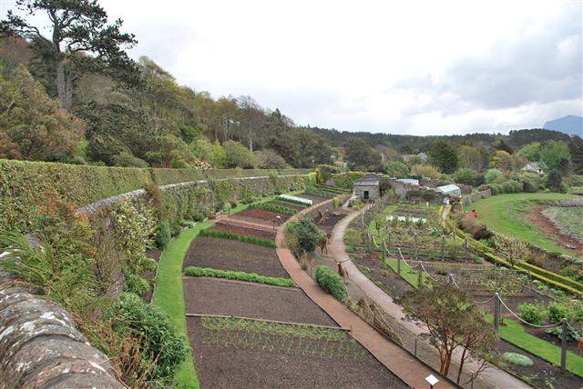 Inverewe walled garden April.