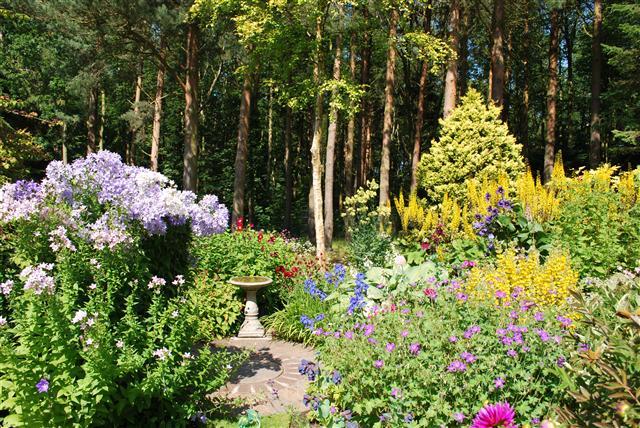 Inwood garden July.